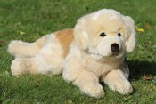 Golden retriever mjukisdjur