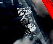 Bracco italiano bildekal - on board