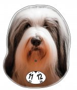 Bearded collie p-skiva