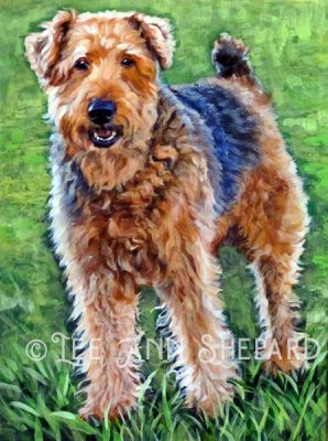 Airedaleterrier 2 Lee Ann