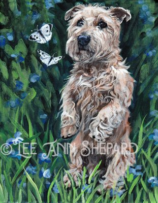 Irish glen of imaal terrier 1 Lee Ann