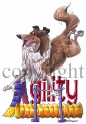 Collie- agility 2 t-shirt McCartney