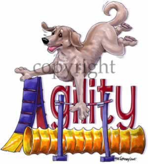 Labrador retriever (gul) agility 4 t-shirt McCartney