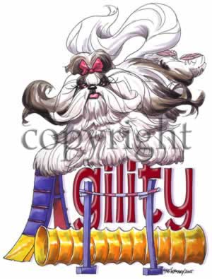 Shih tzu agility 3 t-shirt McCartney