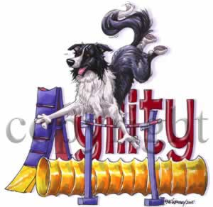 Border collie agility 3 t-shirt McCartney