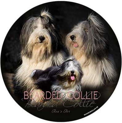 Bearded collie bildekal 1 Åsas Art