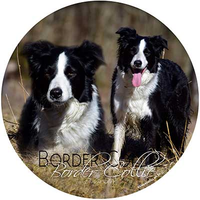 Border collie bildekal 1 Åsas Art