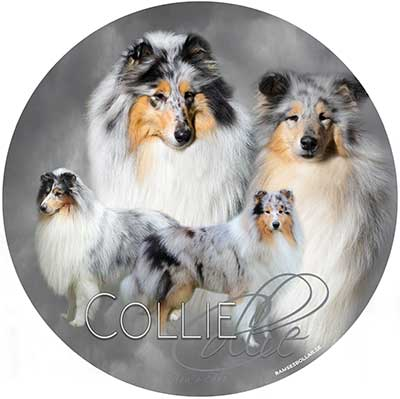 Collie- bildekal 1 Åsas Art