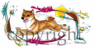 Shiba at play t-shirt McCartney