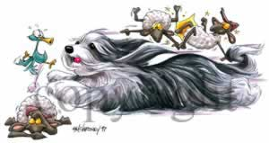Bearded collie at play 2 t-shirt McCartney
