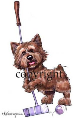 Norwichterrier calendar out takes t-shirt McCartney