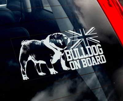 Engelsk bulldogg bildekal - on board