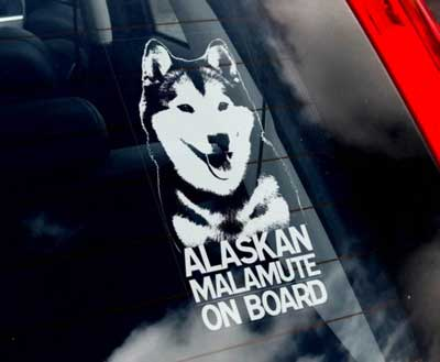Alaskan malamute bildekal - on board