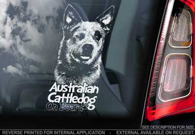 Australian cattledog bildekal V3 - on board