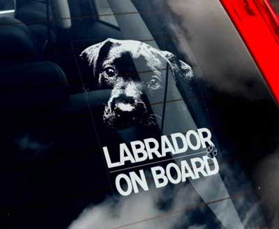 Labrador retriever bildekal - on board