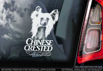 Chinese crested dog bildekal V3 - on board