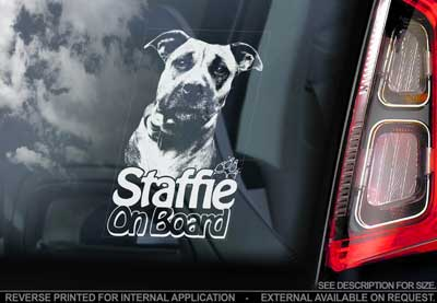 Staffordshire bullterrier bildekal V9 - on board