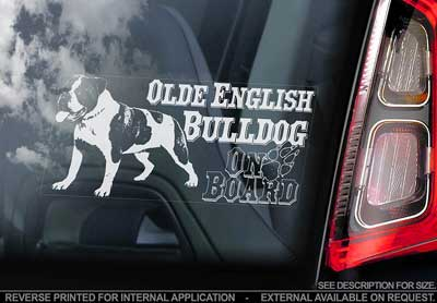 Olde english bulldogge bildekal - on board