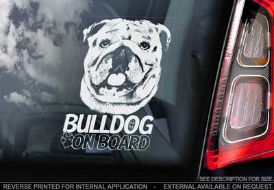 Engelsk bulldogg bildekal V2 - on board