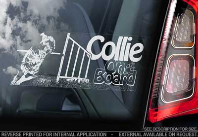 Collie- (agility) bildekal V3 - on board