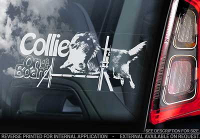 Collie- (agility) bildekal V4 - on board