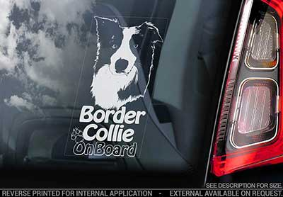 Border collie bildekal V6 - on board