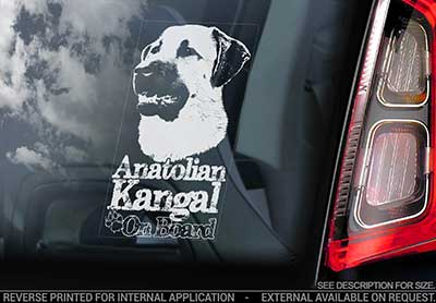 Kangal çoban köpegi bildekal V1 - on board