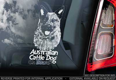 Australian cattledog bildekal V6 - on board