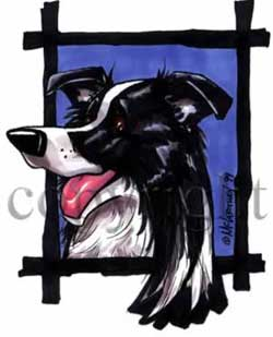 Border collie happy head t-shirt McCartney