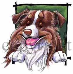 Australian shepherd happy head t-shirt 3 McCartney