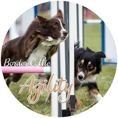 Border collie agility bildekal