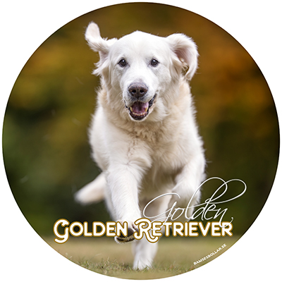 Golden retriever bildekal