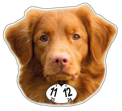 Nova scotia duck tolling retriever p-skiva