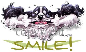Engelsk springer spaniel smile t-shirt McCartney
