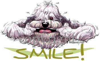 Old english sheepdog smile t-shirt McCartney