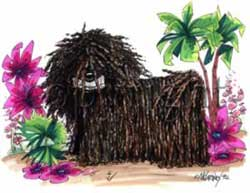 Puli cartoon t-shirt McCartney