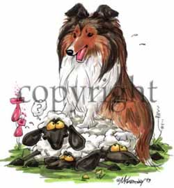 Shetland sheepdog cartoon t-shirt 2 McCartney