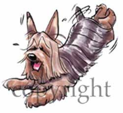 Silky terrier cartoon t-shirt 2 McCartney